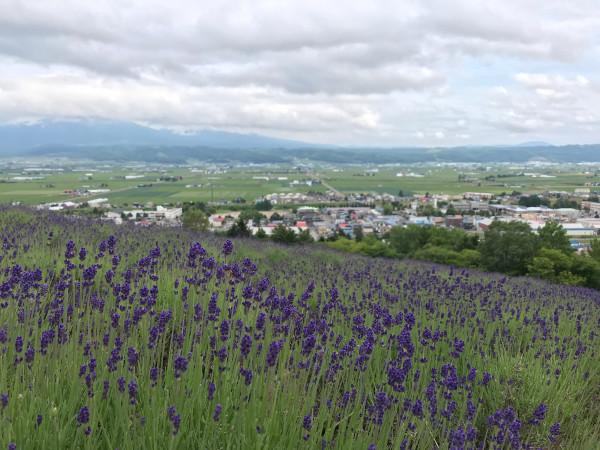 Naka Furano Lavender