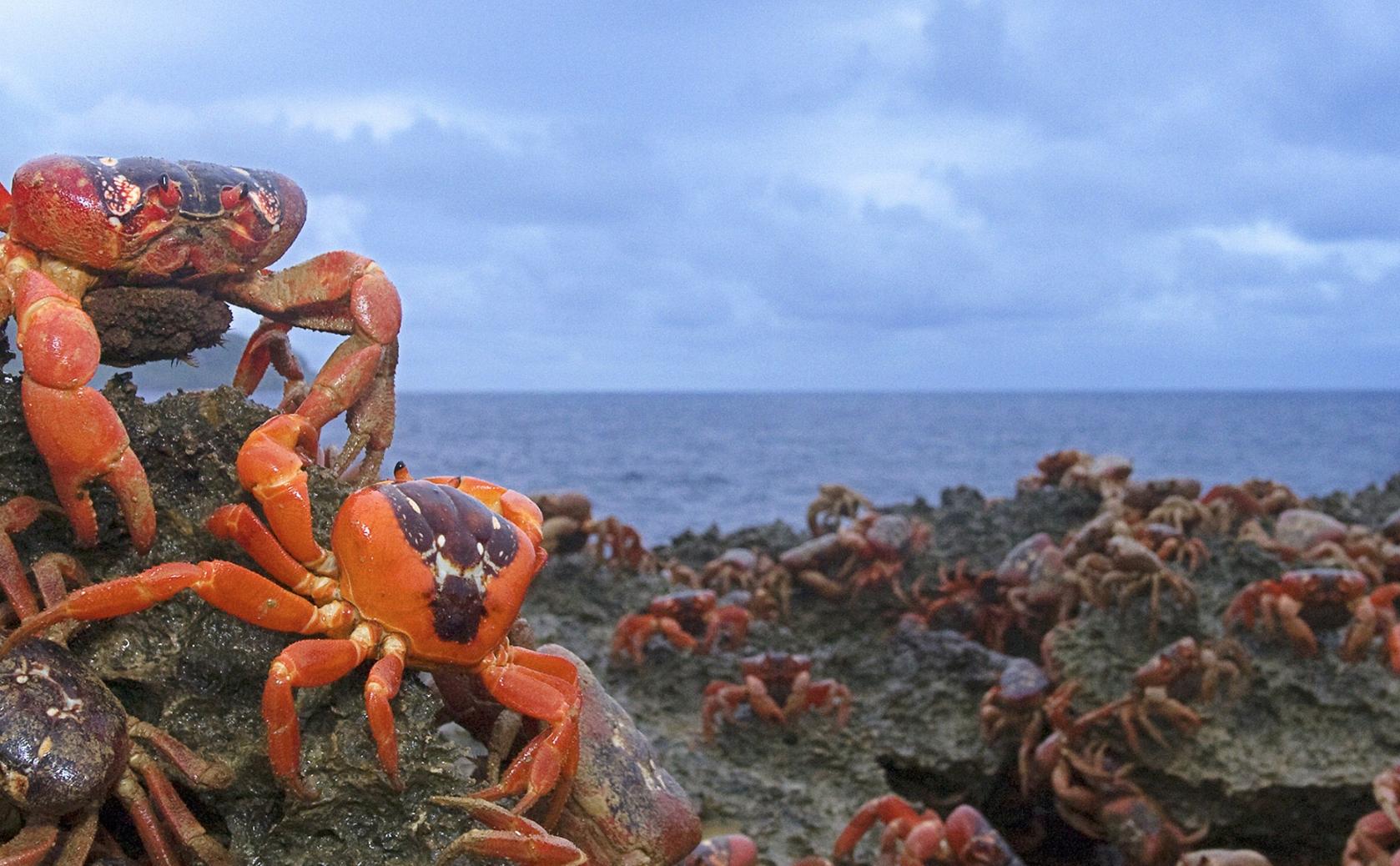 澳洲海島 – 世外桃園