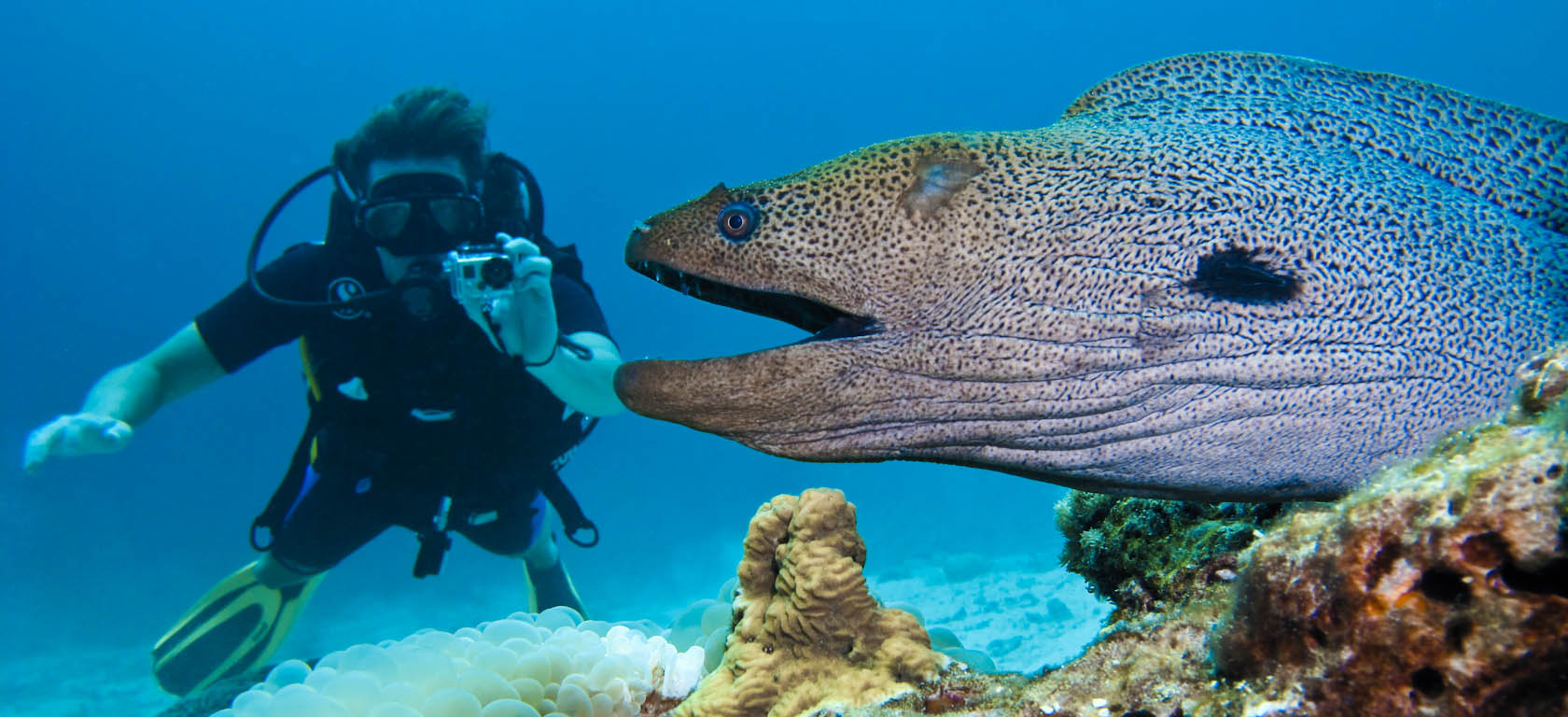 Giant-Moray-Eels-Gymnothorax-javanicus